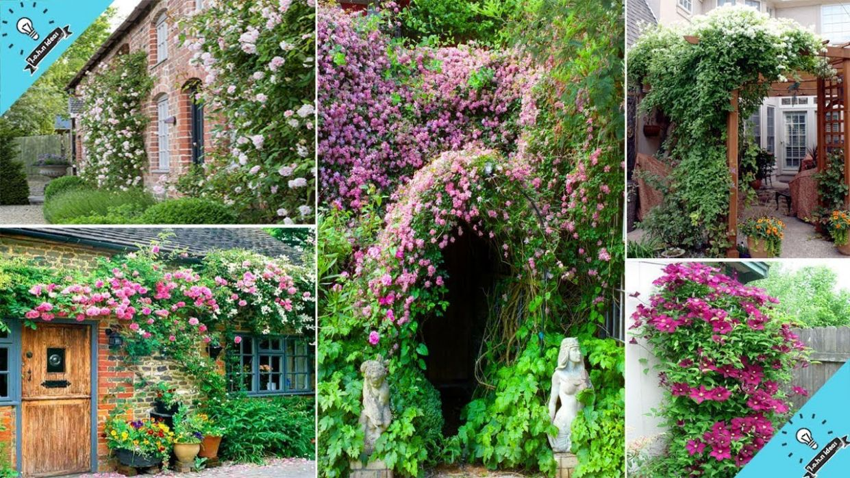 12 best Climbing Plants For The Garden | Garden Ideas - backyard vines ideas