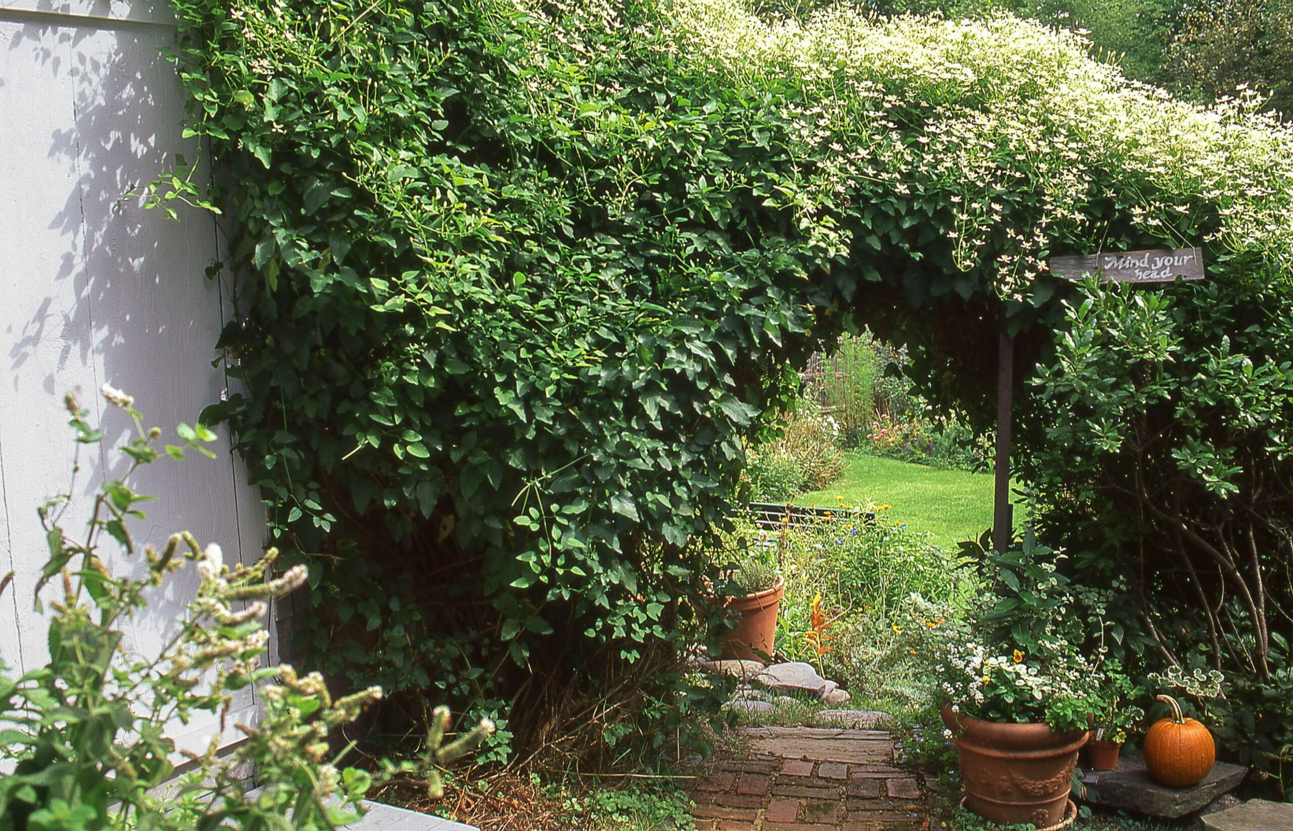 12 Best Flowering Vines and Vine Plants - Best Wall Climbing Vines ..