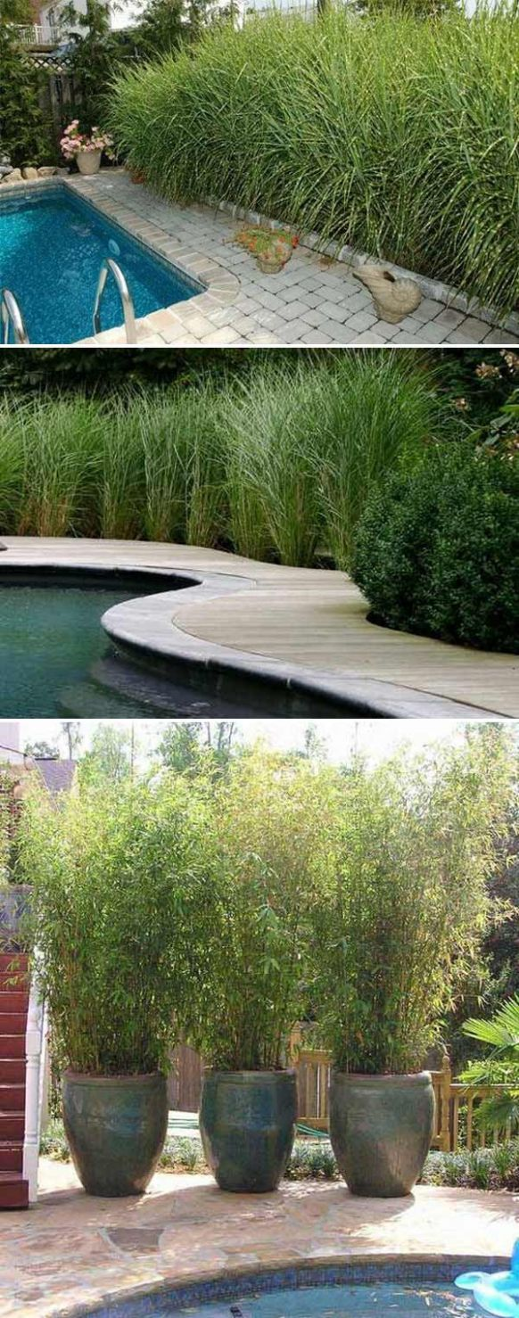 12 Cool Ideas for Getting Privacy in Summer Patio and Yard – LazyTries