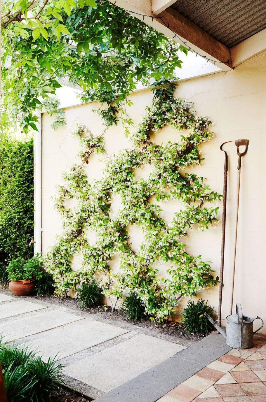 12 Impressive Climber and Creeper Wall Plants Ideas | Indoor ..