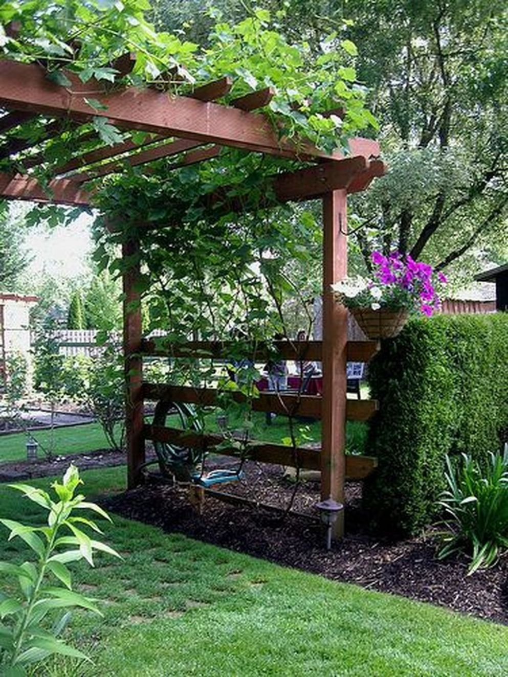 12 Inspiring Grape Vine Ideas To Beautify Your Garden | Cottage ...