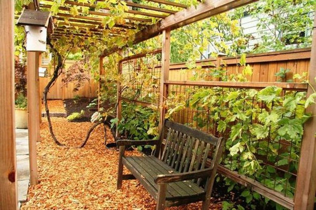 12 Inspiring Grape Vine Ideas To Beautify Your Garden - Trendehouse - backyard vines ideas