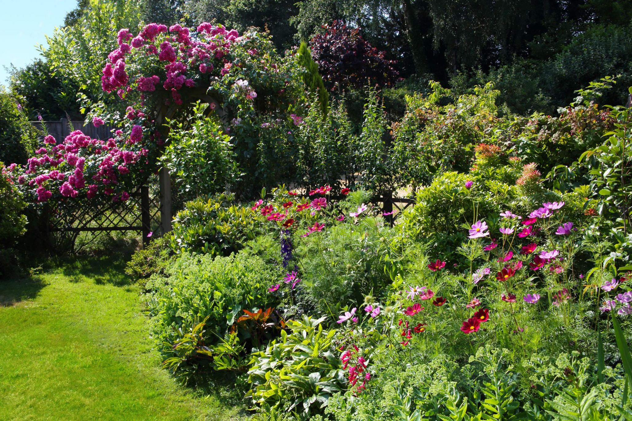 8 Best Low-Maintenance Bushes and Shrubs — Easy Garden Plant Ideas