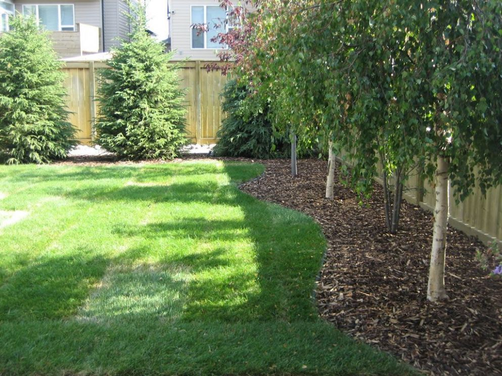8+ Unique Ideas of How to Build Backyard Tree Landscaping ...