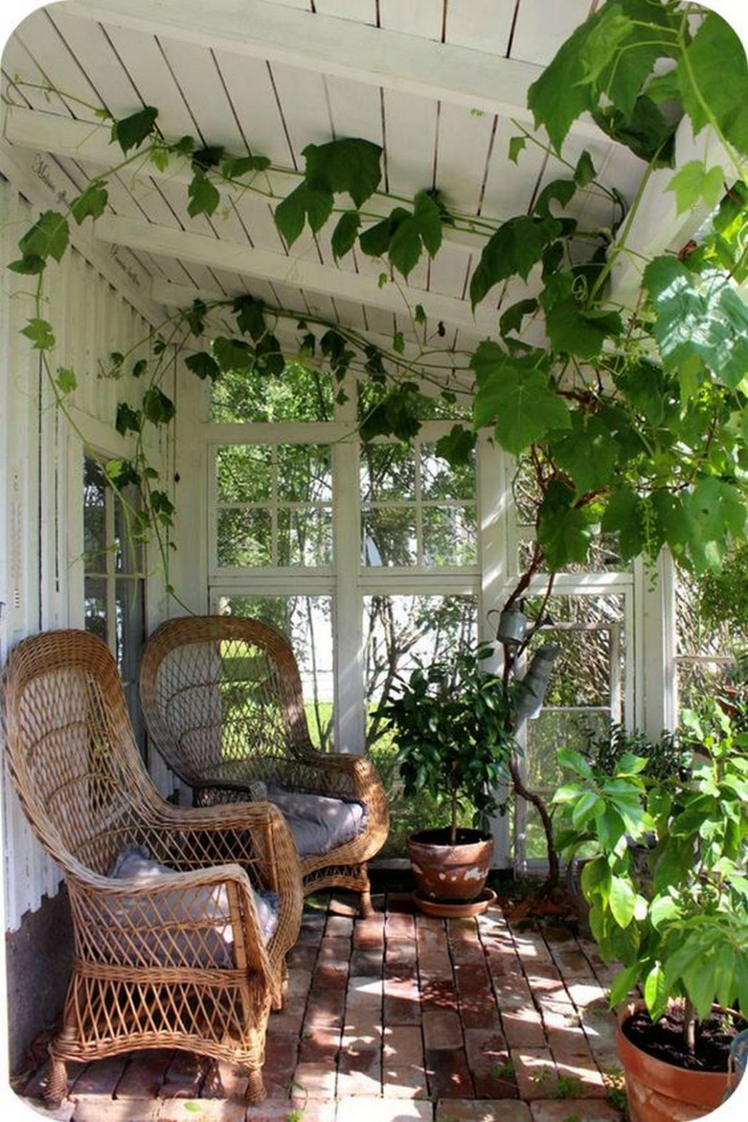 Beautiful Grape Vine Ideas to Invite Freshness in your House ..