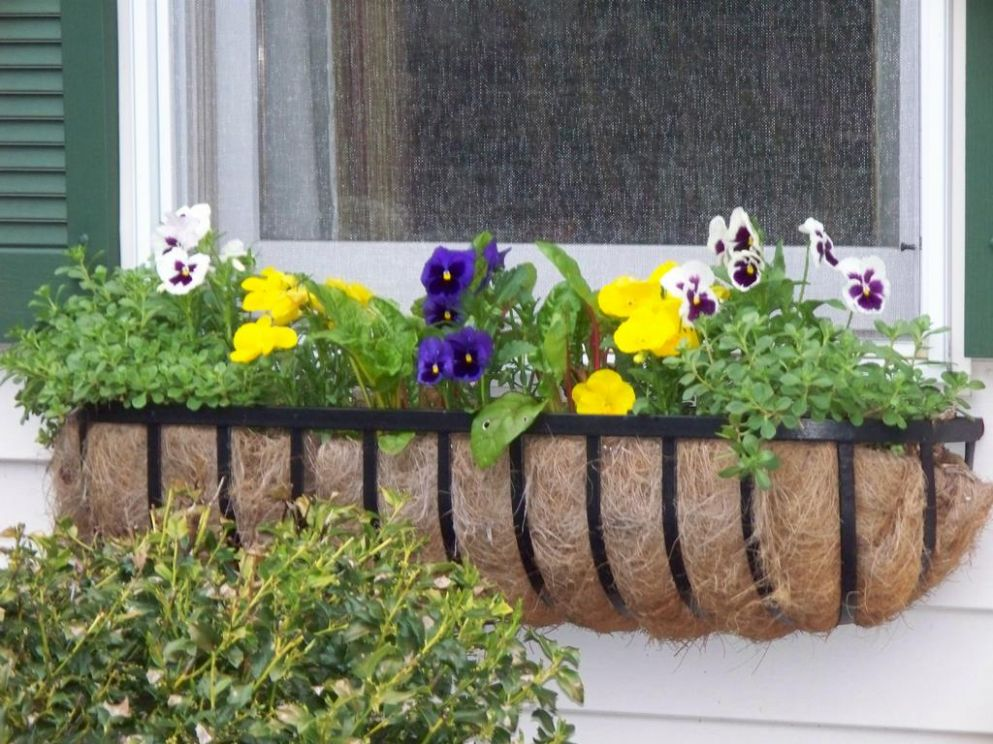Brilliant Window Planter Boxes — Home Decorations Insight from ..