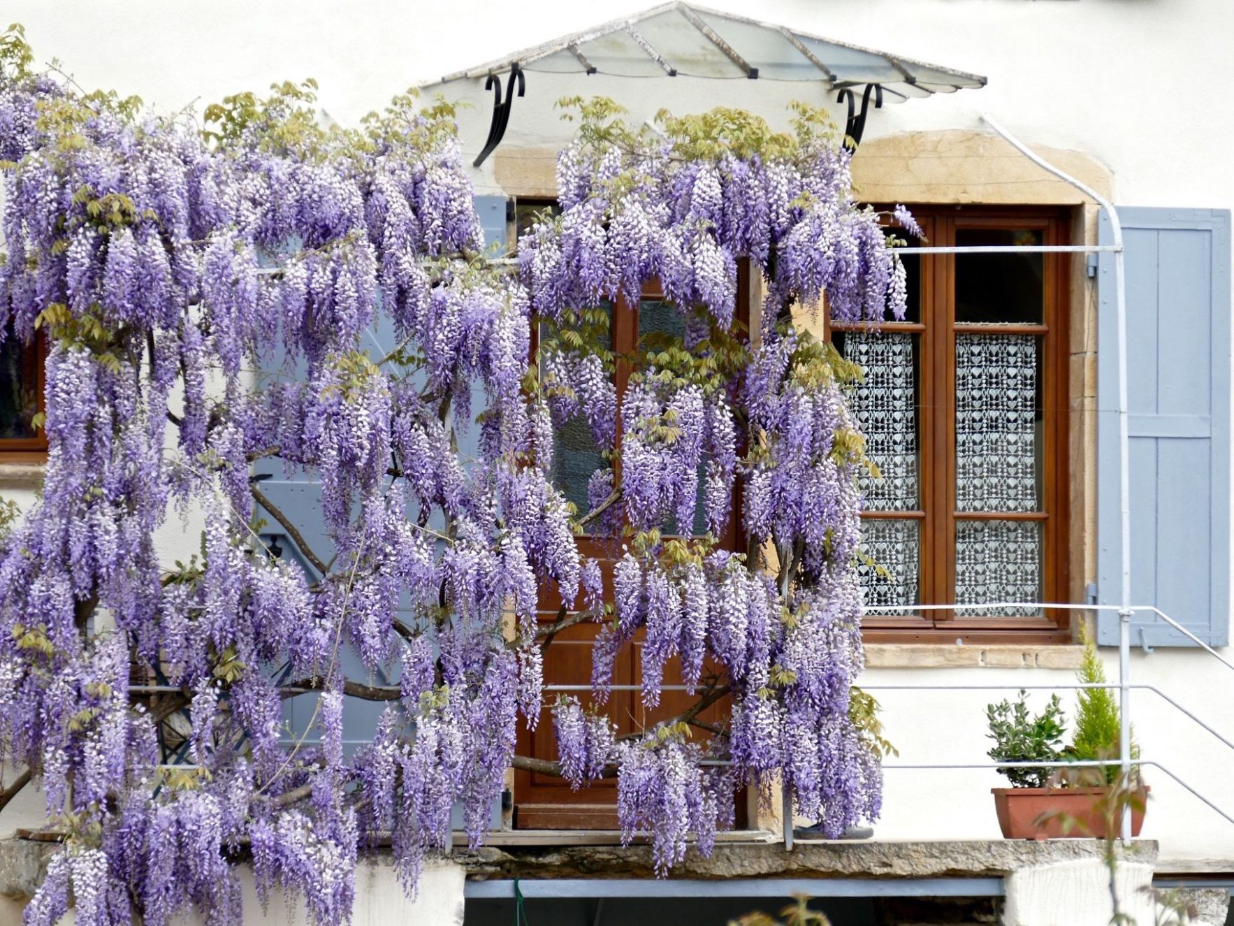 Design Ideas for Flowering Vines - backyard vines ideas