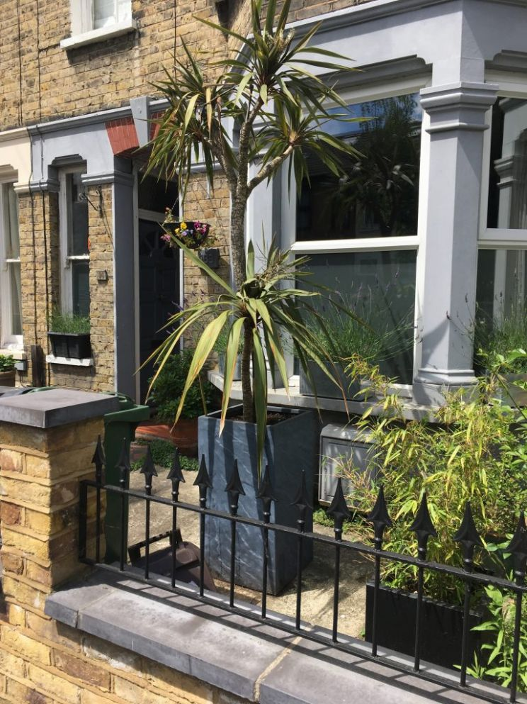 Front garden inspiration (from a nutter) for our East London ...