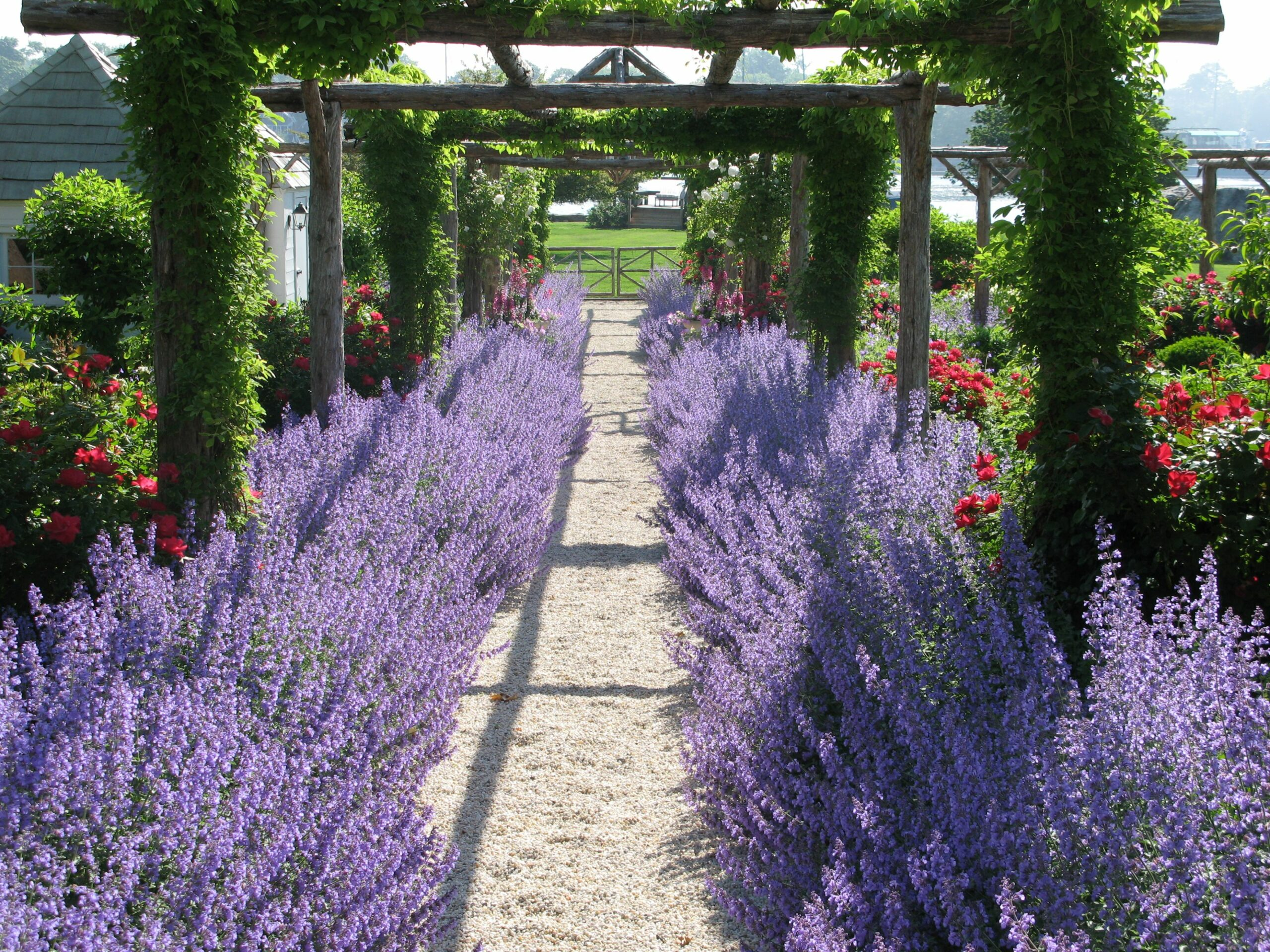Garden design ideas lavender | Hawk Haven - garden ideas lavender