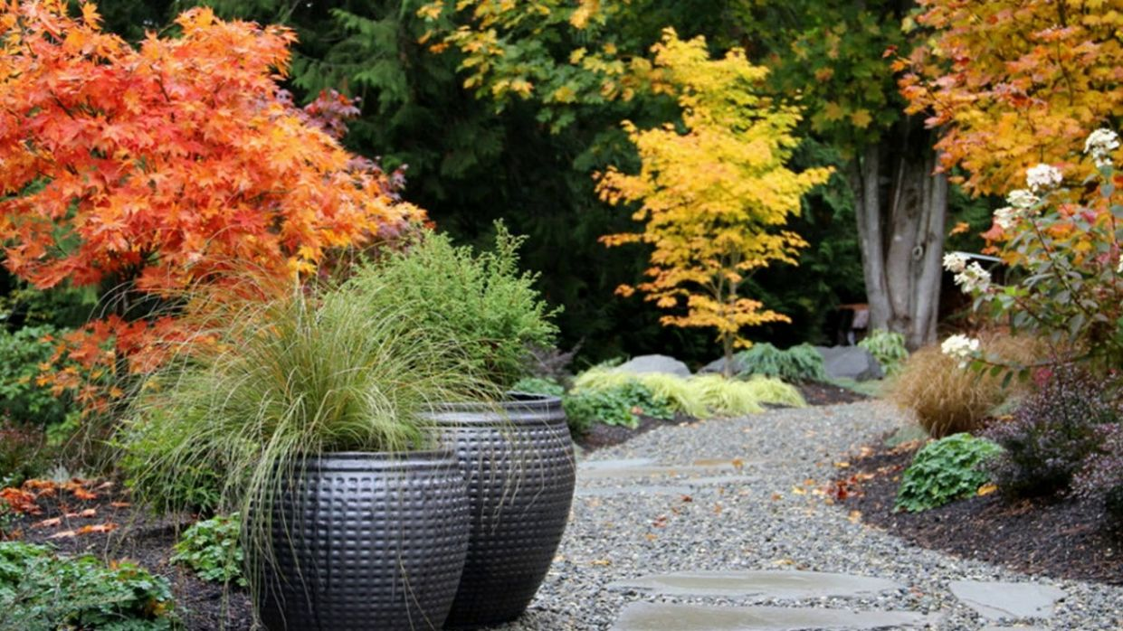 Garden Design Japanese Maple - Garden Design Ideas - YouTube - garden ideas with japanese maple