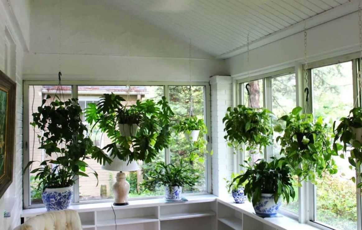 Good Plants In Your Sunroom | Hanging plants, Hanging plants diy ..