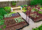 Grow Vegetables In Your Own Vegetable Garden – Growing Bonsai
