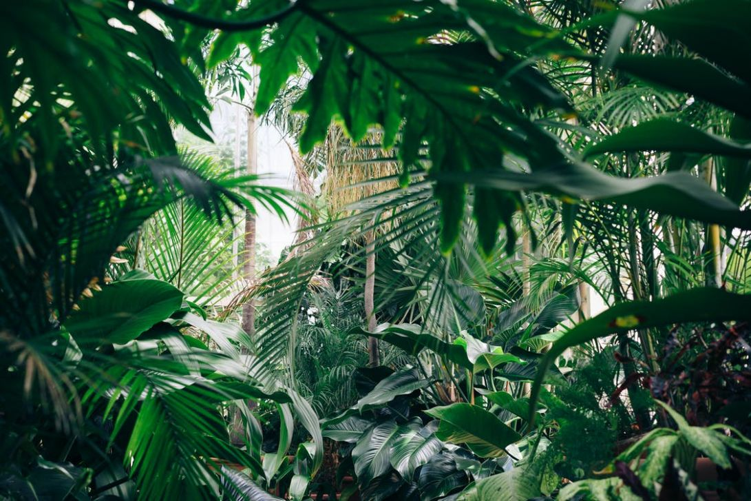 How to Create your own Jungle Paradise - Jungle Spaces - jungle backyard ideas