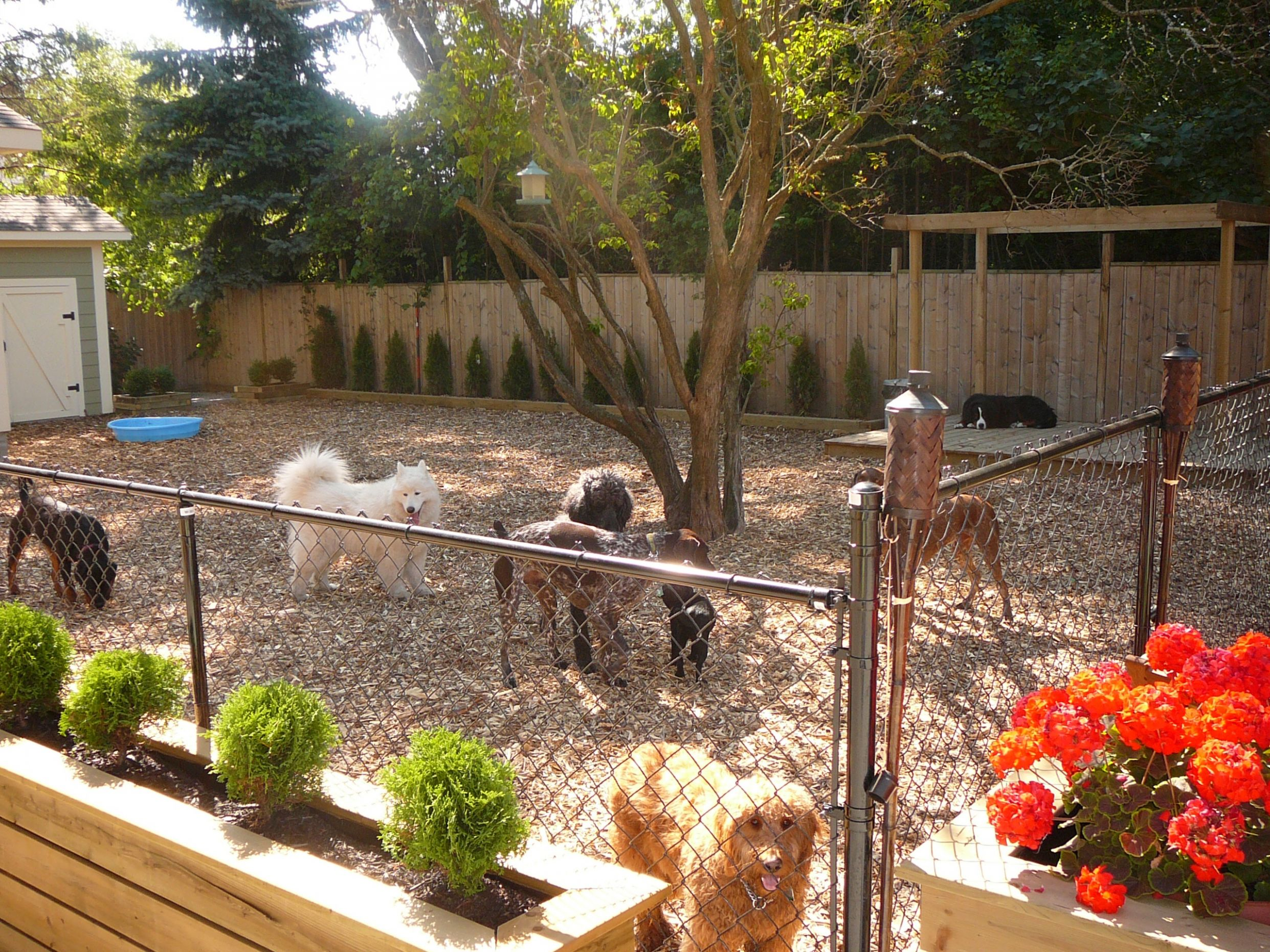 Ideas For Backyard Best Small Backyards With Dogs Deepnot Golime ...