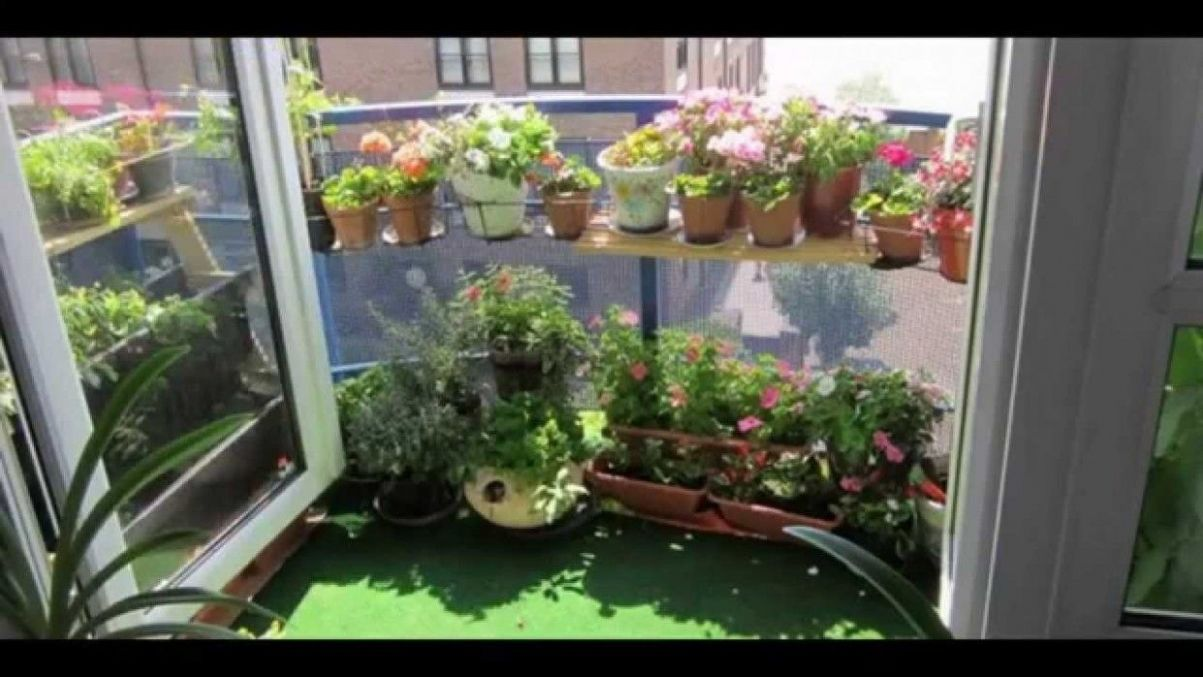 Indoor Vegetable Garden Ideas Friday, 10th January 10, 10:10 ..