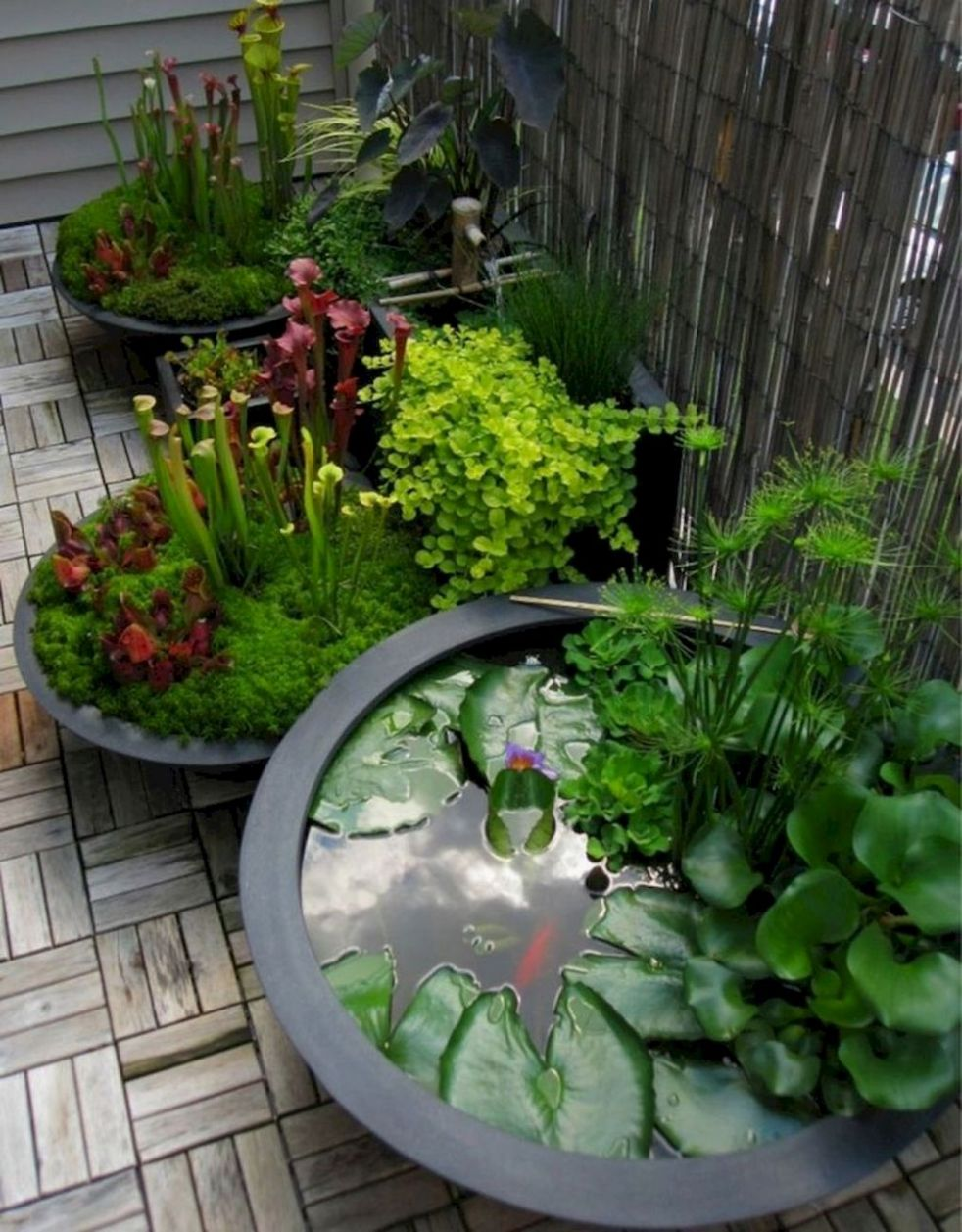 landscaping ideas zone 9 (With images) | Japanese garden, Modern ..