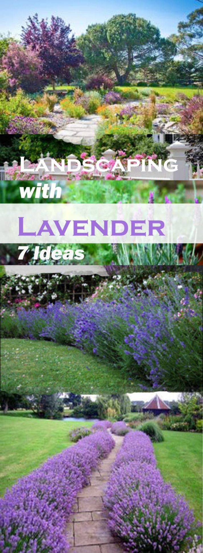 Landscaping with Lavender | 12 Garden Design Ideas - garden ideas lavender