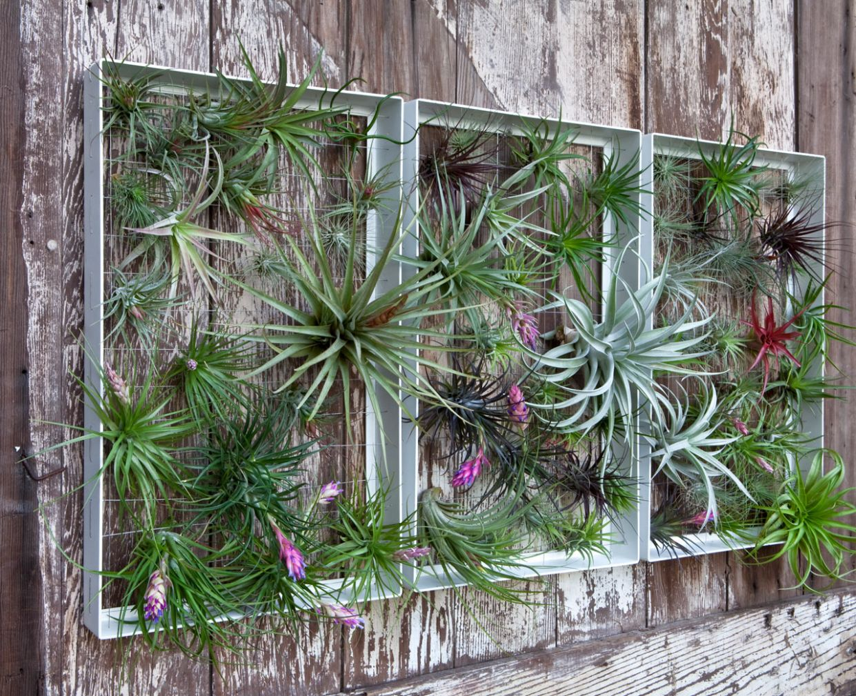 Living Wall Art Vertical Garden Frames by Airplantman - Design Milk