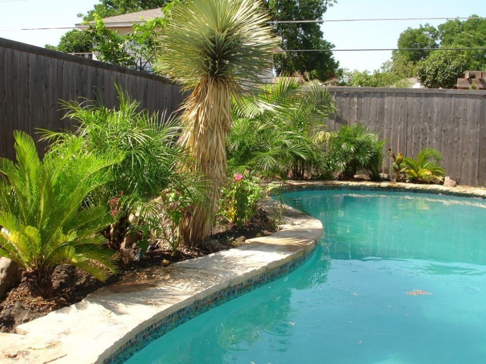 New Pool Plants Ideas - Trend Design Models - pool landscaping ideas queensland