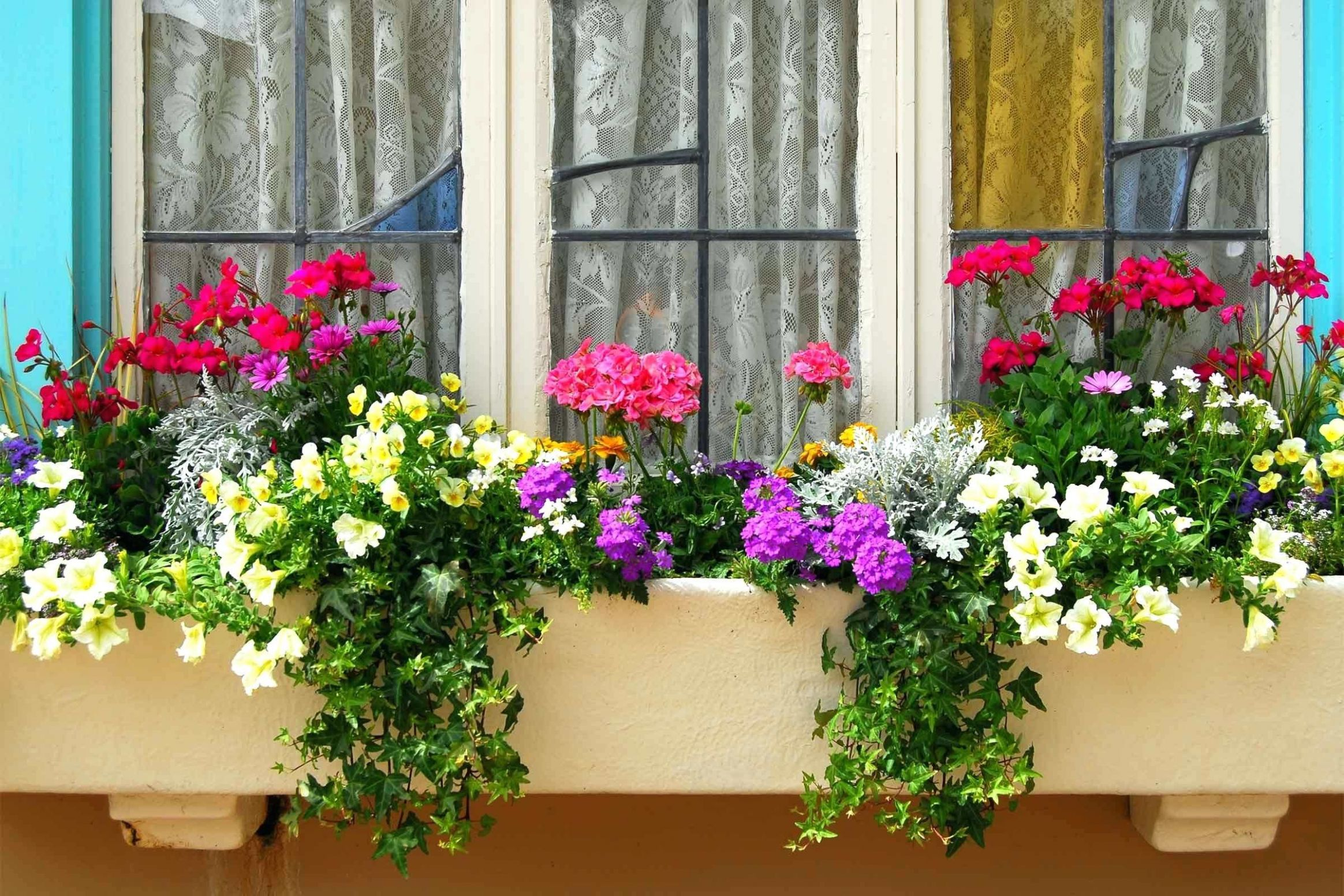 Opt For Woodbest Flowers Window Boxes Uk Best Hot Sunny | Window ...