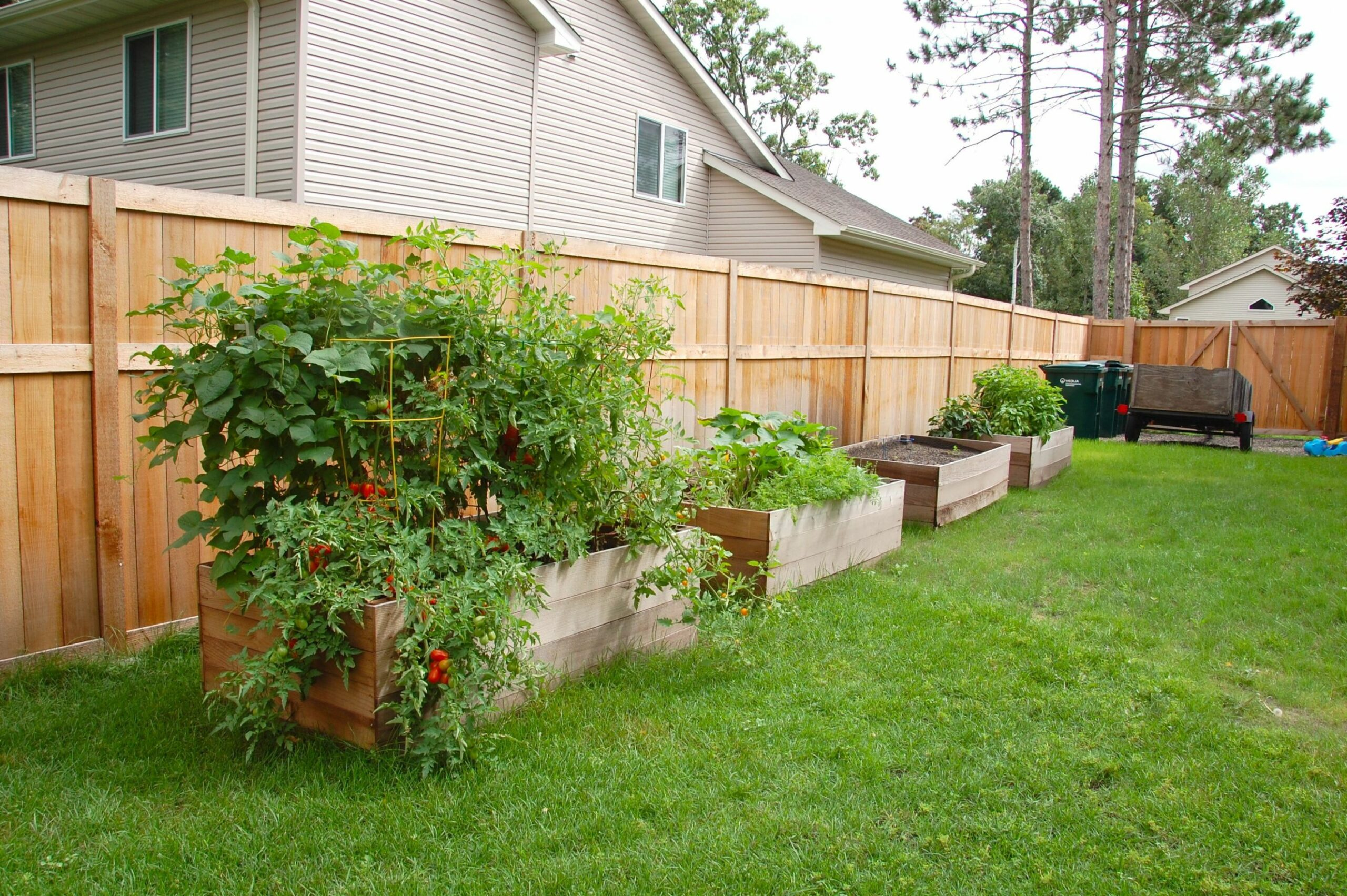 Raised beds... along the back fence (just a couple-10) incorporate ..