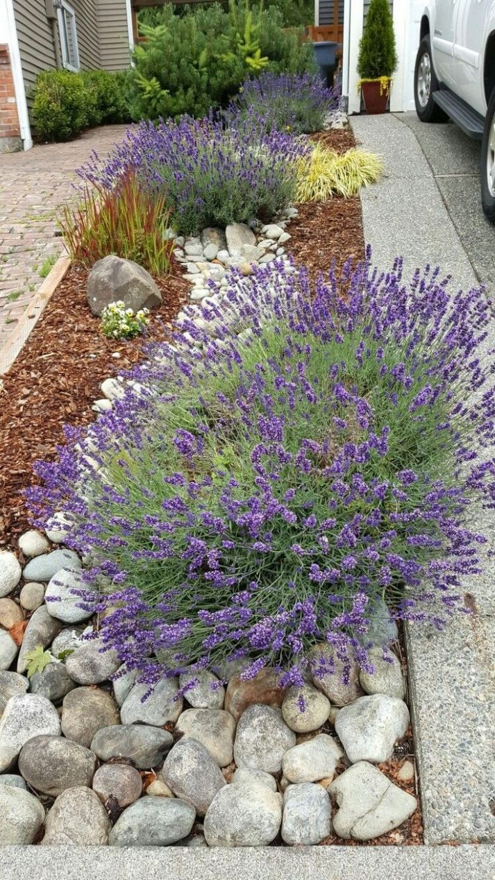 River rock landscape and lavender bush | Vorgarten, Garten, Garten ..