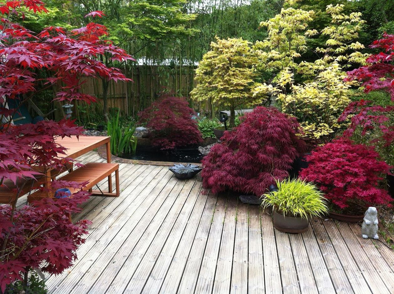 Small Japanese Garden Transforms This Backyard - Watch | Zen ...