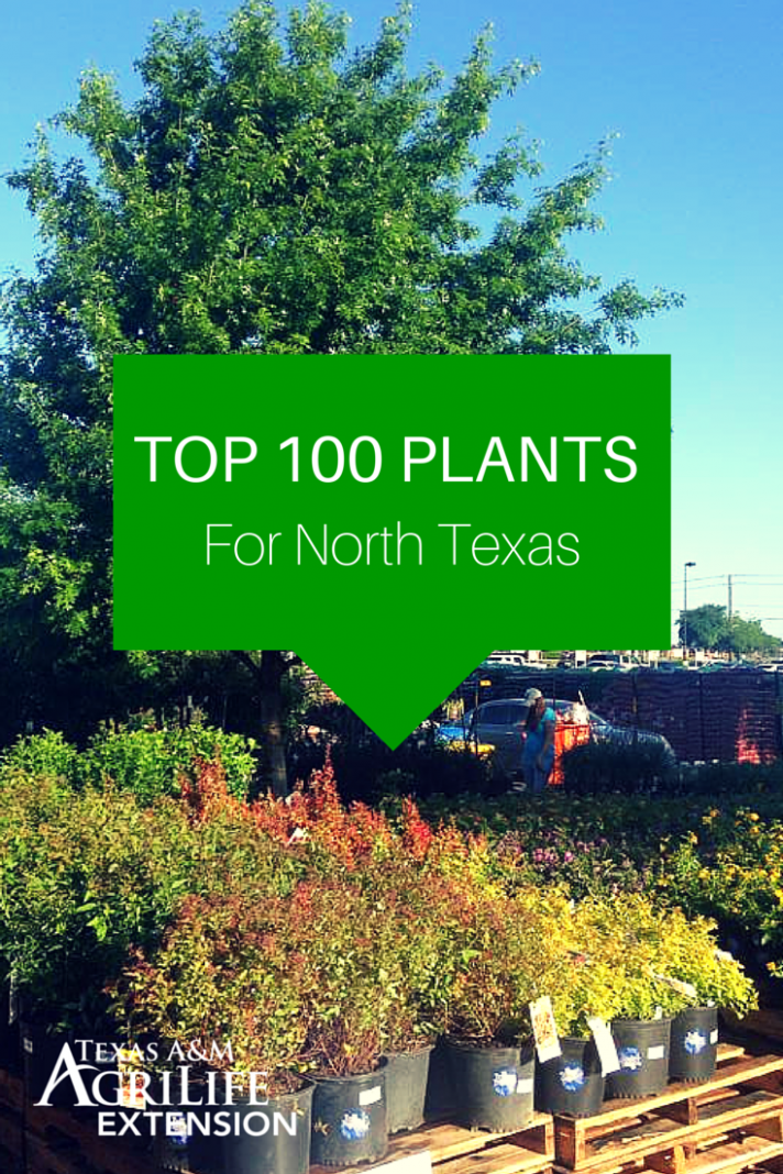 Top 8 Plants for North Texas | Texas landscaping, Texas ..