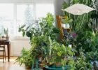 Urban Jungle | Interior | living and decorating with plants