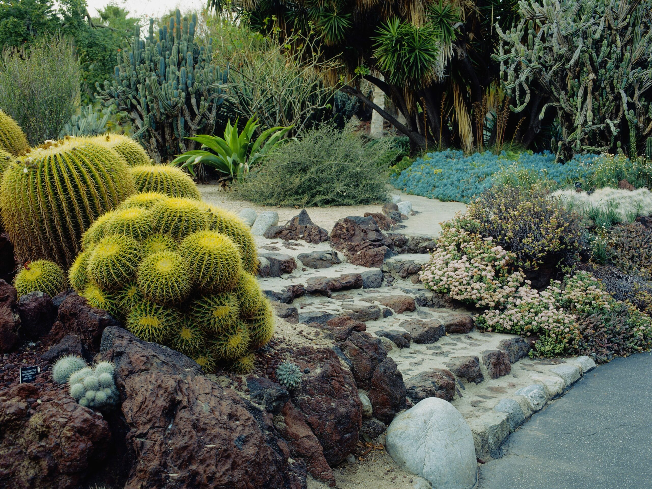 What Is Drought Tolerant Gardening?