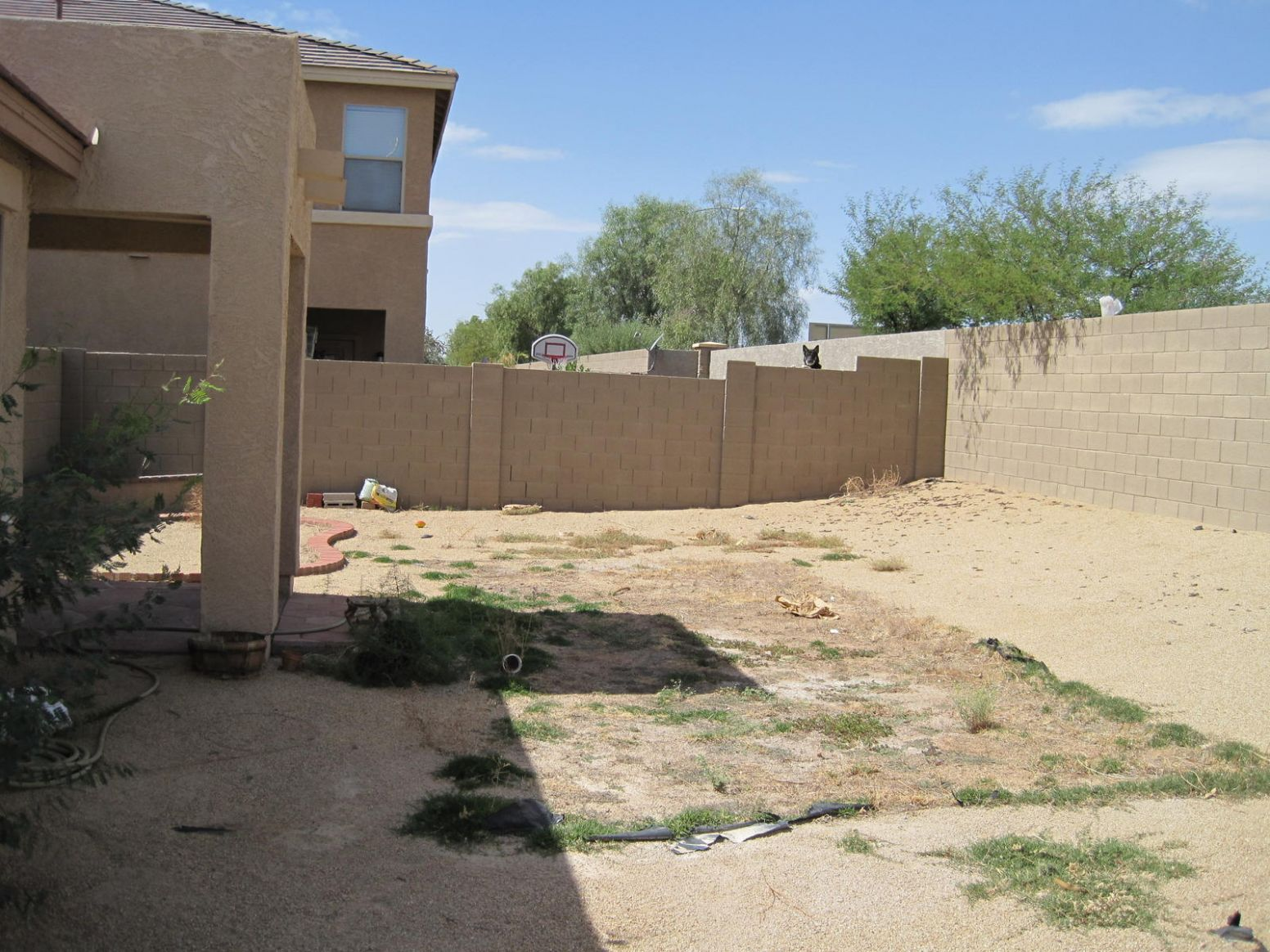 Whats would be the cheapest way to landscape this yard? (rental ...