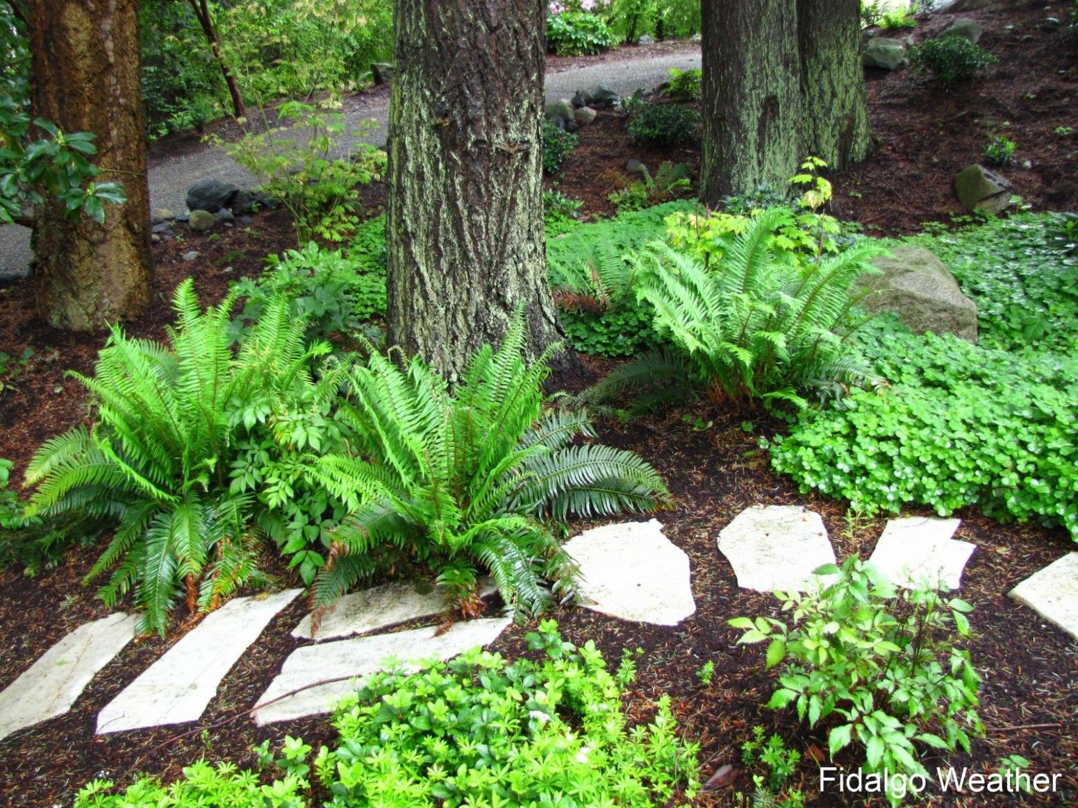 zone 9 garden ideas Shade Garden Ideas Zone 9 Design Decorating ...