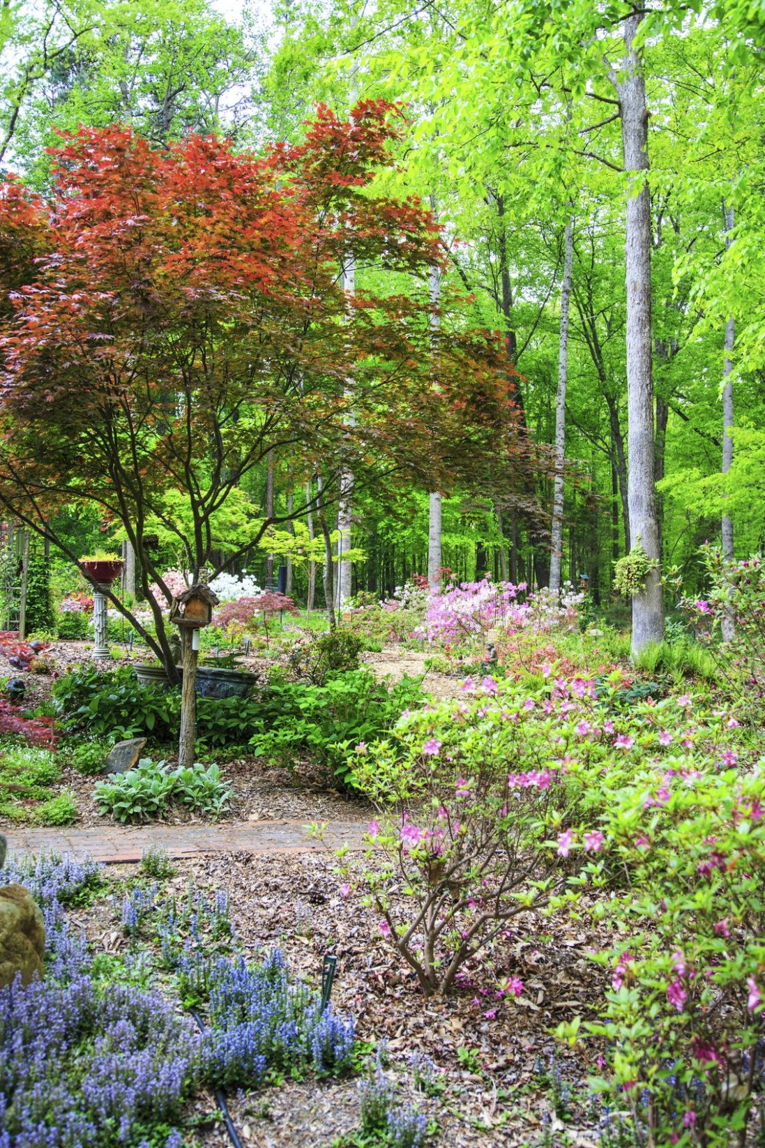 Zone 9 Plants: Learn About Planting A Garden In Zone 9 | Beautiful ...