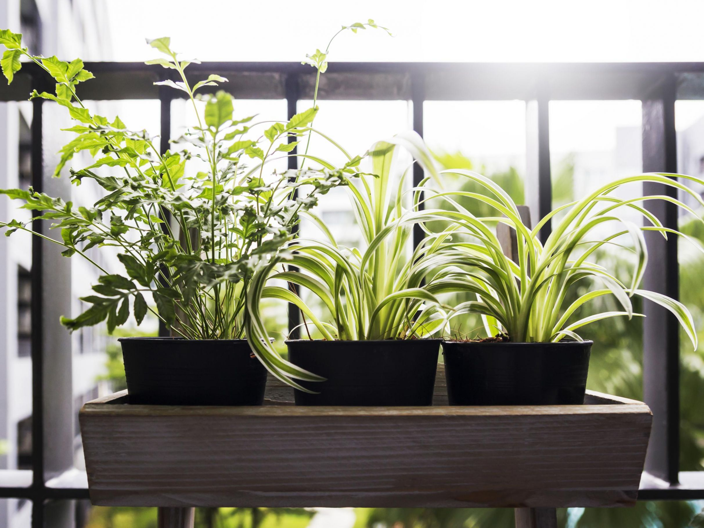 10 best balcony planters | The Independent - balcony planting ideas uk