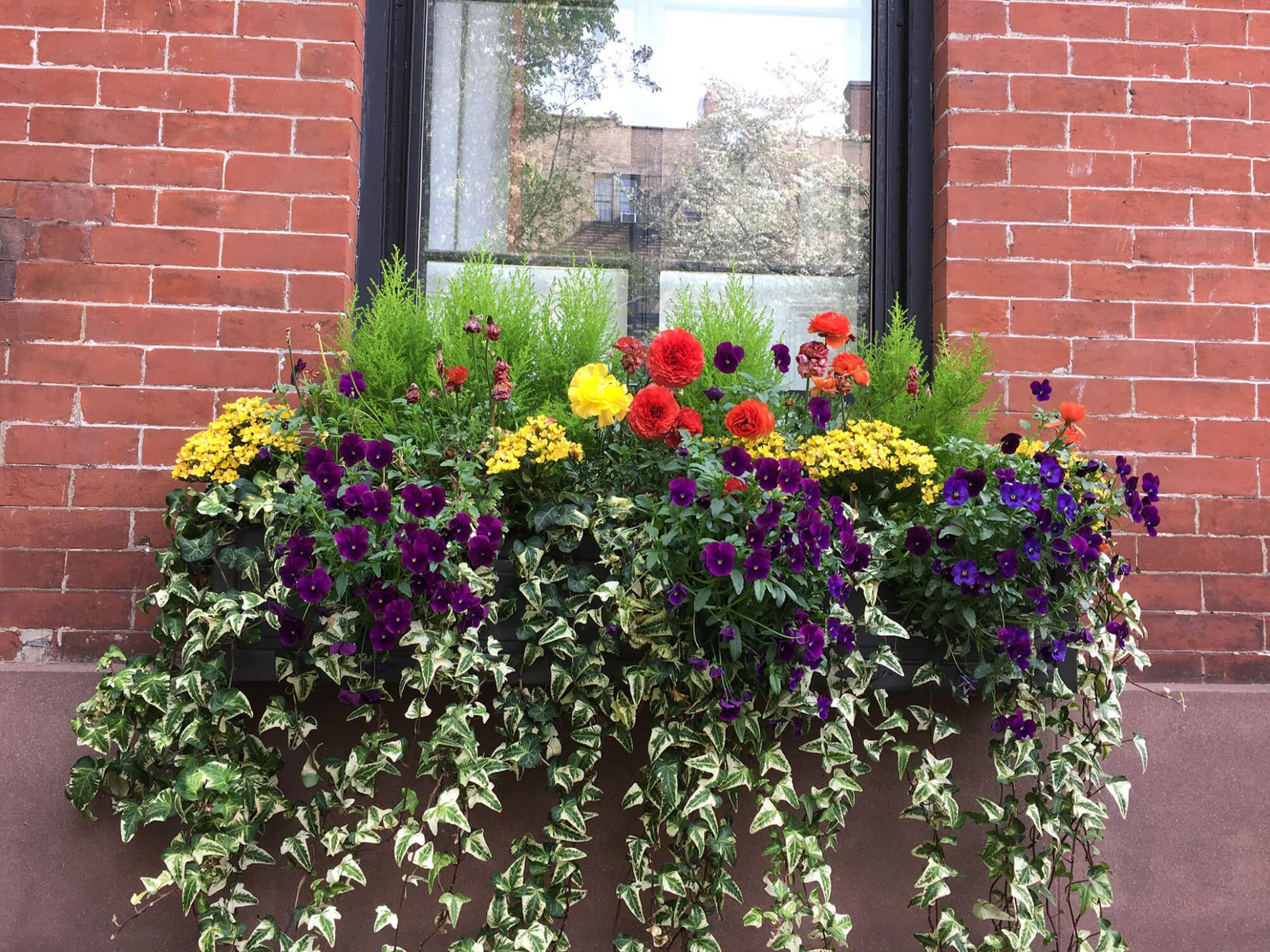 10 Tips for Beautiful Window Boxes All Year Round | Brownstoner - window box ideas