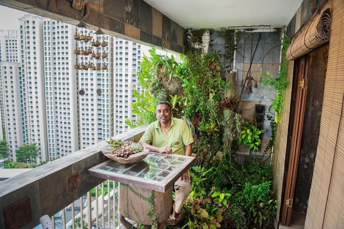 A balcony is all you need to grow a lush garden, as these HDB ...