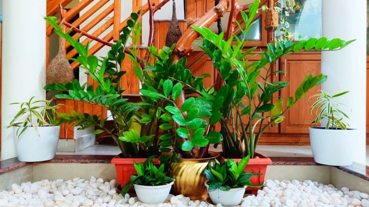 Beautiful Home garden ideas/Hanging plants/Malayalam/Indoor plants/Salu  koshy/Creative garden/Care/ - garden ideas malayalam
