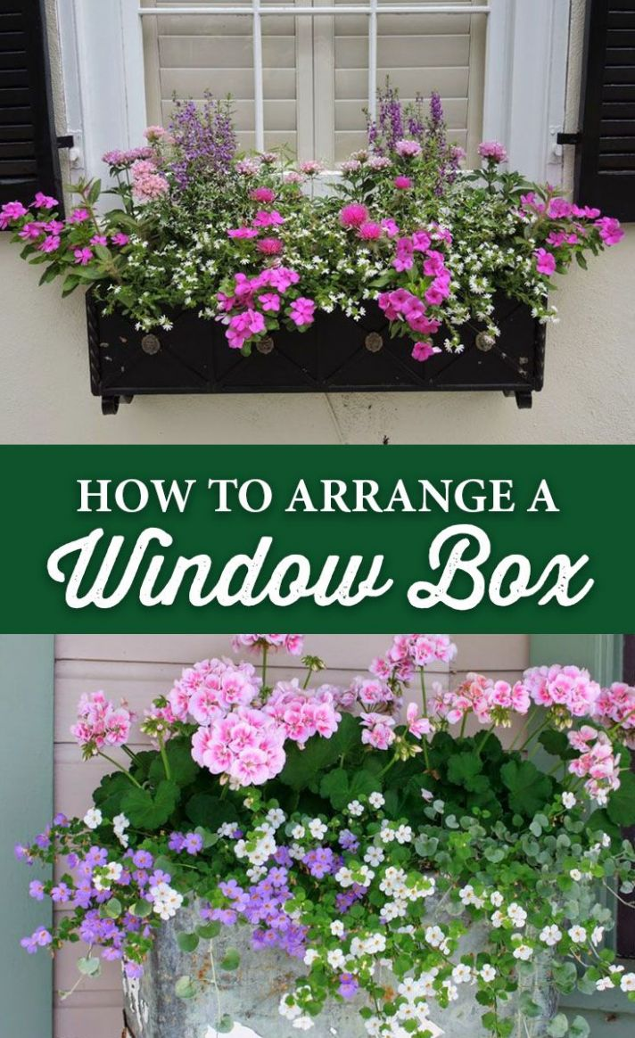 How to Arrange a Window Box | Fensterbox blumen, Gartenfenster ..