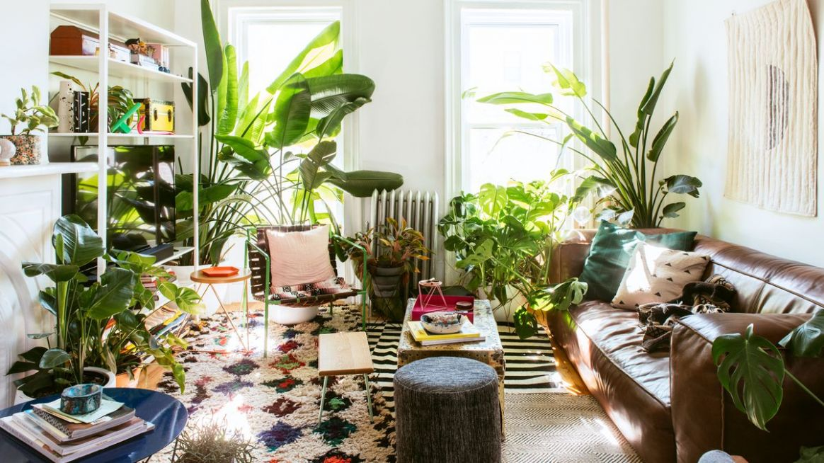Plant decor ideas for the living room, bedroom, and more - Curbed - living room ideas plants