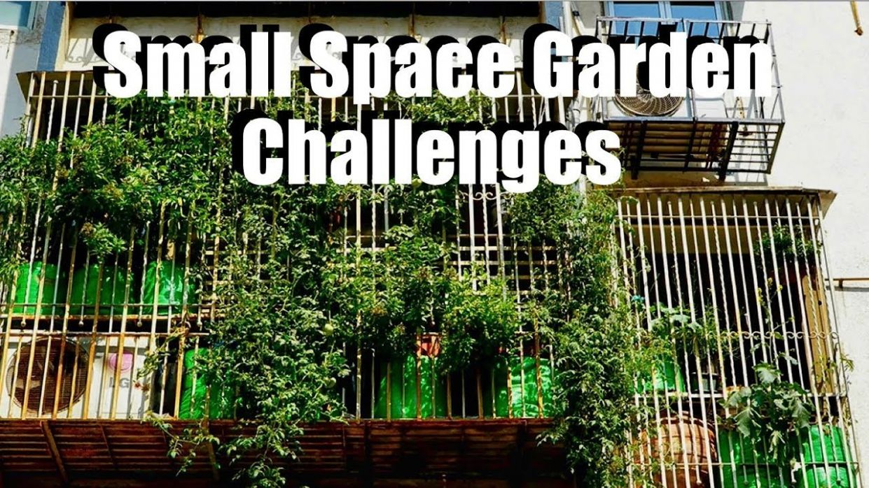 Small Space Garden Challenges: Feat