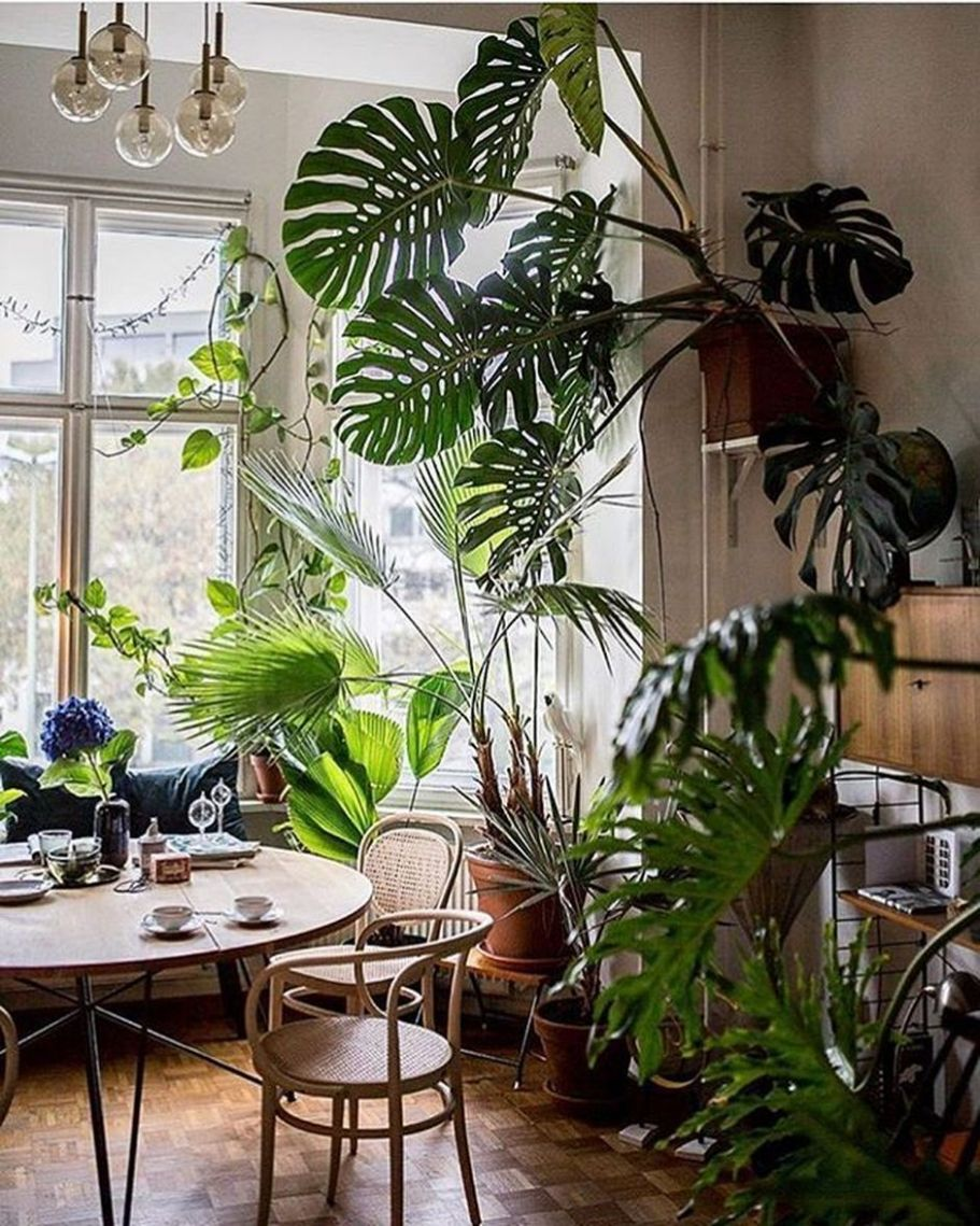 10 Amazing Home Indoor Jungle Decorations Tips and Ideas | Jungle ..