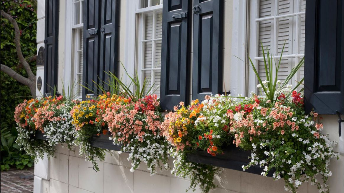 10 Fresh Ideas for Summer Windowboxes – Grow Beautifully - window box ideas no plants