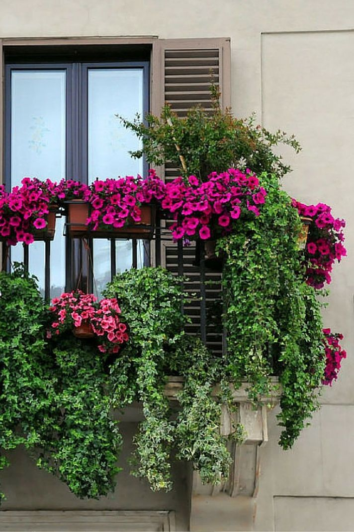 10 Window and Balcony Flower Box Ideas (PHOTOS) | Patio flowers ...