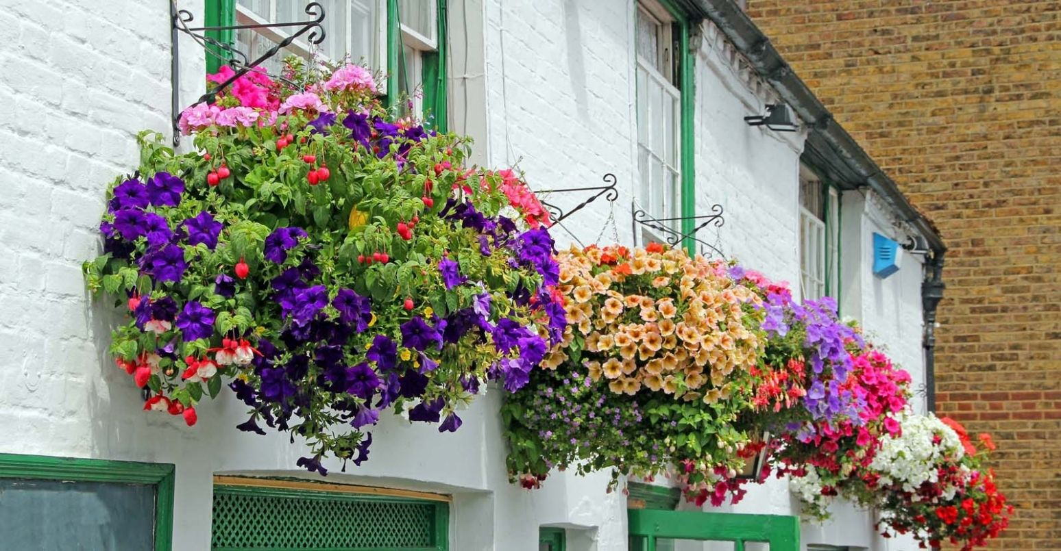 11 Hanging Basket Ideas | My Garden Life - garden ideas hanging baskets