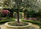 12 Best Small Trees for Patios