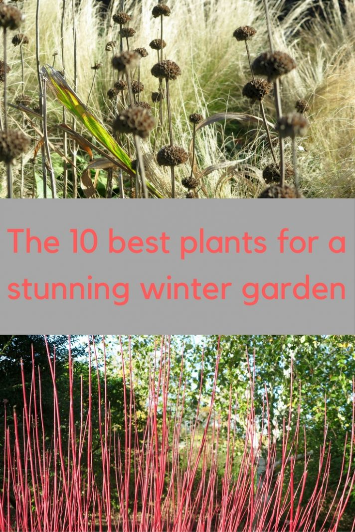 12 creative ways to improve your winter garden - The Middle-Sized ..