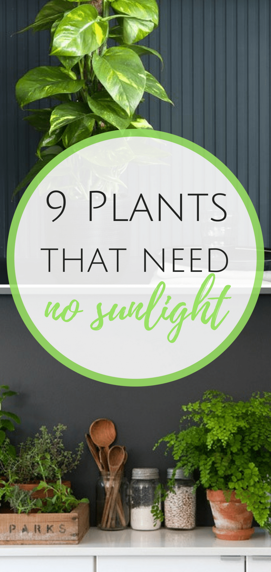 8 Plants That Need (Almost!) No Sunlight | Indoor vegetable ..
