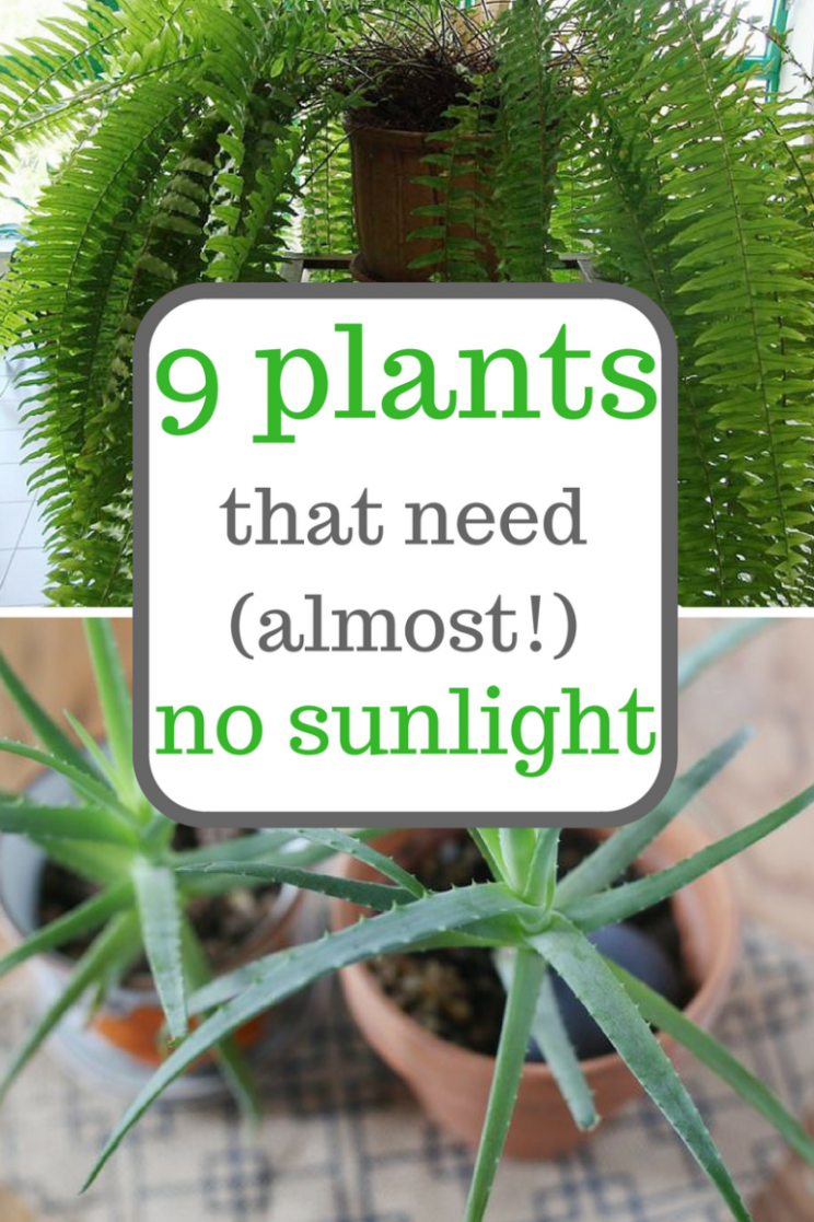 8 Plants That Need (Almost!) No Sunlight | Plants, Inside plants ..