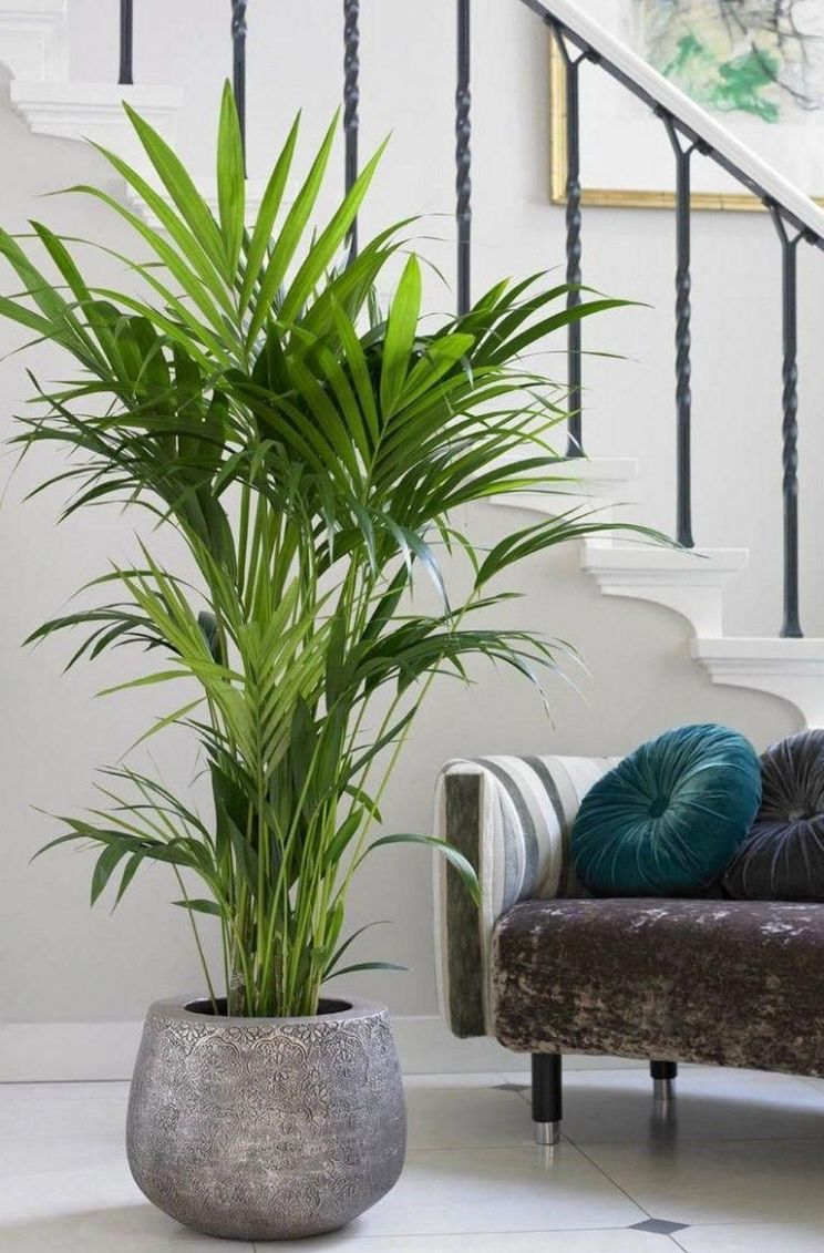 9+ Beauty Indoor Plants Decor Ideas For Your Home And Apartment ..