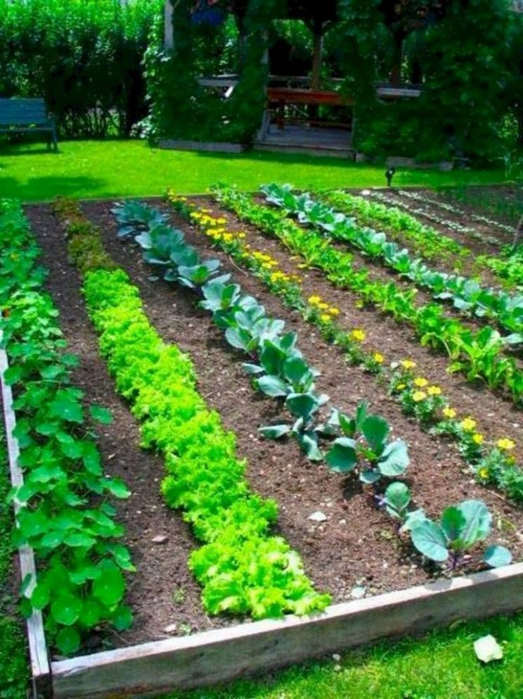 9 Best Productive Small Vegetable Garden Ideas For Your Small ..